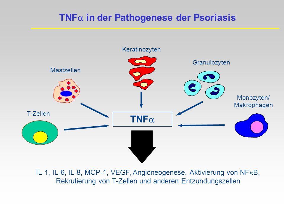 TNFa in der Pathogenese der Psoriasis