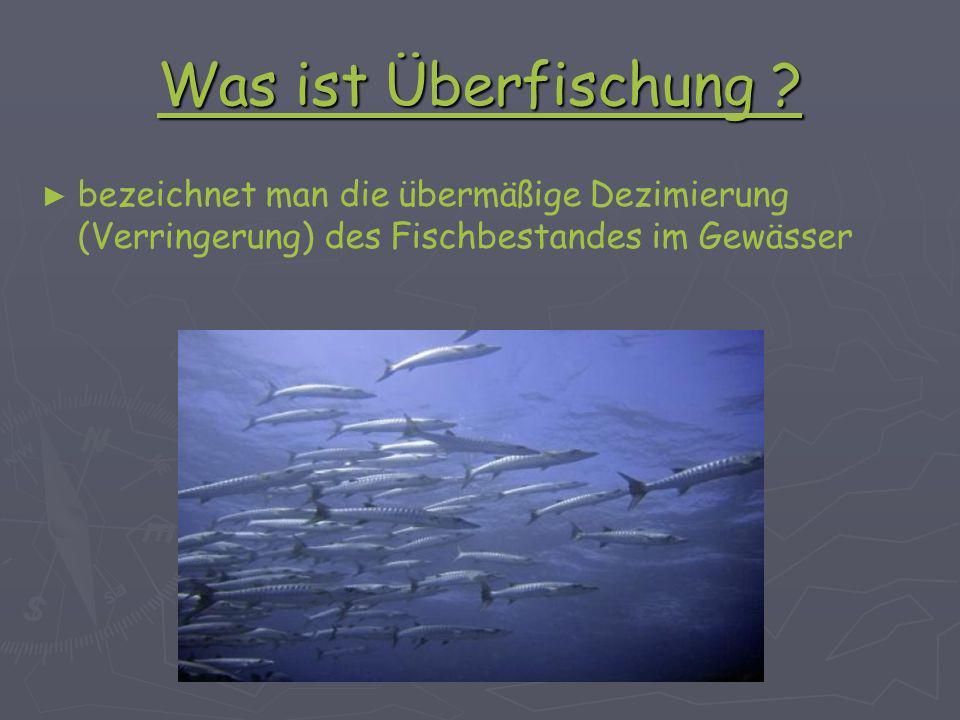 überfischung folgen ökosystem
