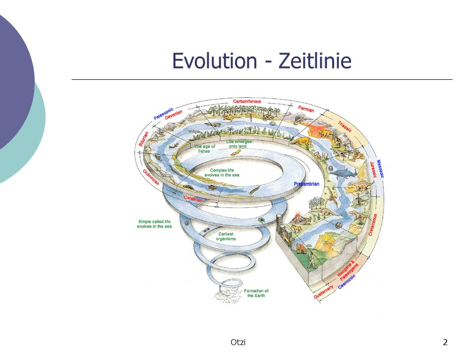 Evolution - Zeitlinie Otzi 2