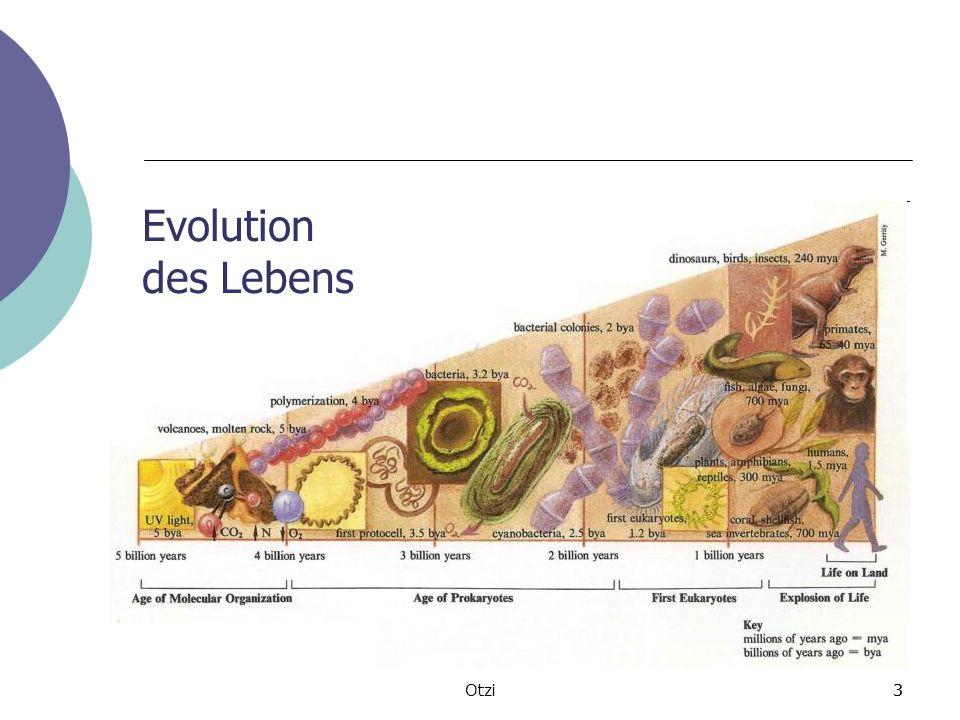 Evolution des Lebens Otzi 3