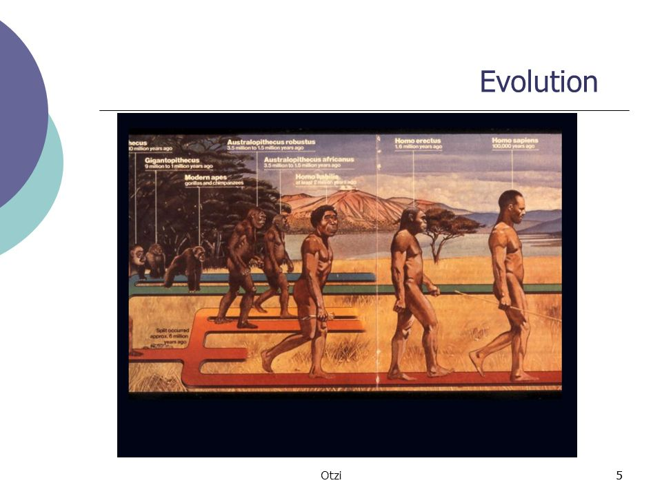 Evolution Otzi 5