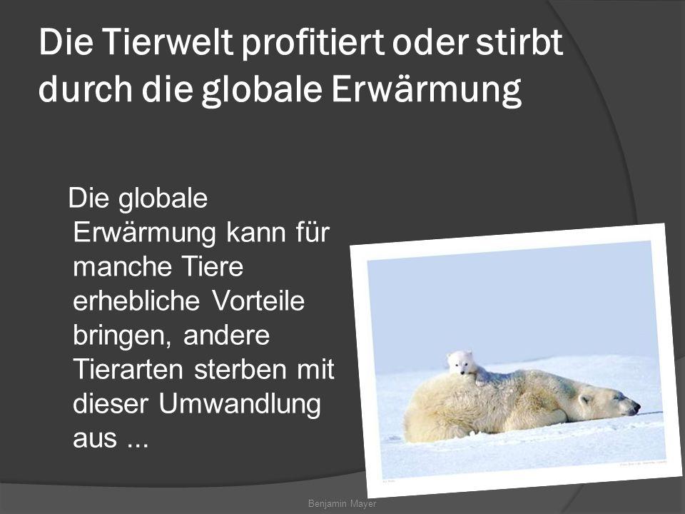 Die Tierwelt profitiert oder stirbt durch die globale Erwärmung