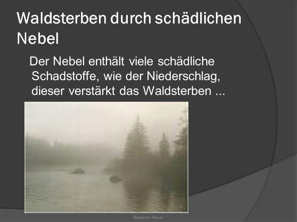 Waldsterben durch schädlichen Nebel