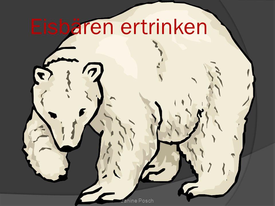 Eisbären ertrinken Janine Posch