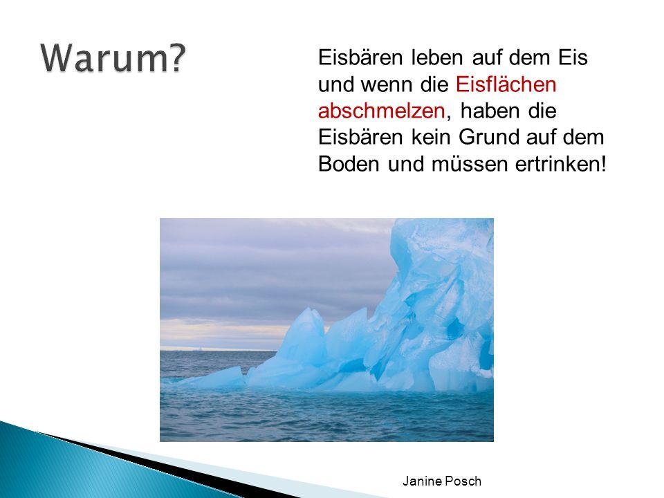 Warum Eisbären leben auf dem Eis und wenn die Eisflächen abschmelzen, haben die Eisbären kein Grund auf dem Boden und müssen ertrinken!