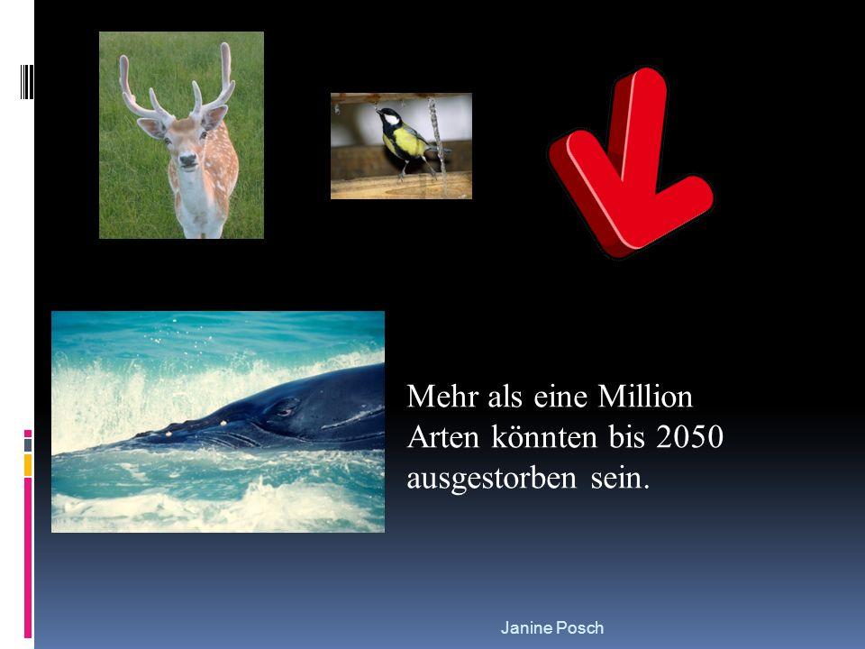 Mehr als eine Million Arten könnten bis 2050 ausgestorben sein.