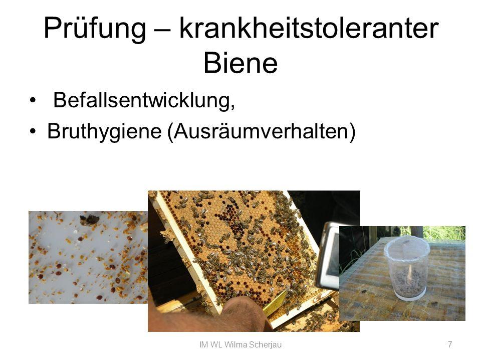 Prüfung – krankheitstoleranter Biene