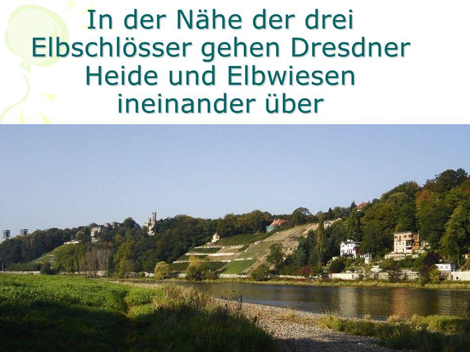 In der Nähe der drei Elbschlösser gehen Dresdner Heide und Elbwiesen ineinander über