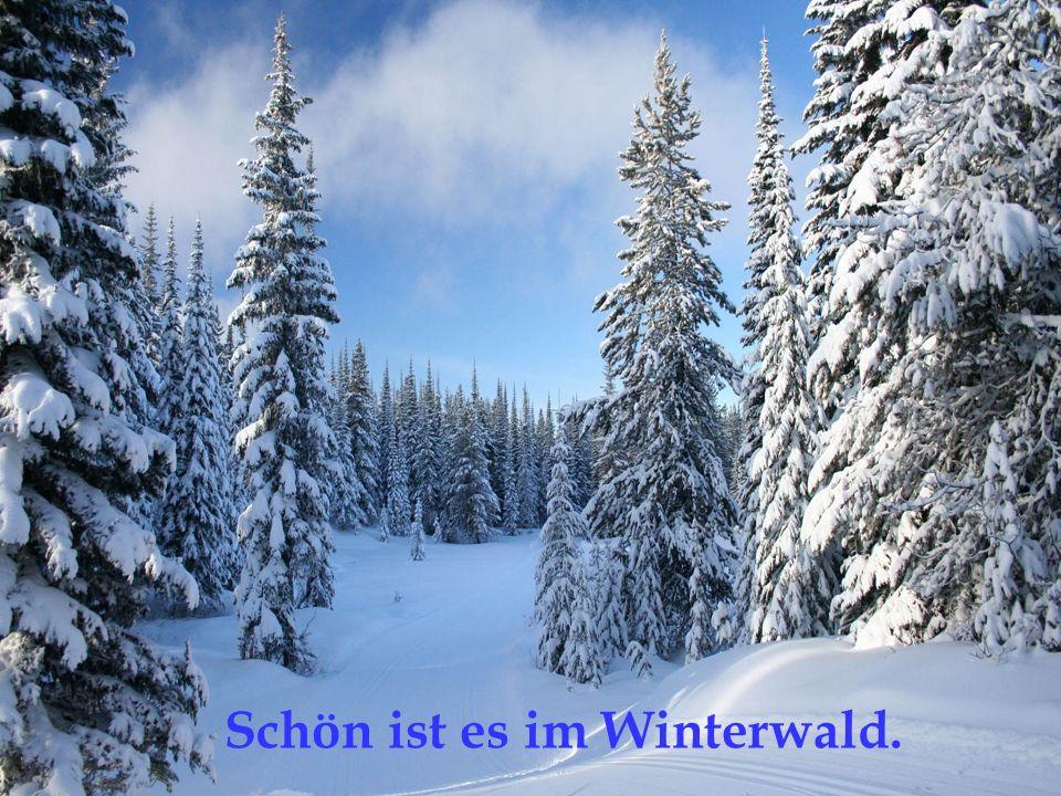 Schön ist es im Winterwald.