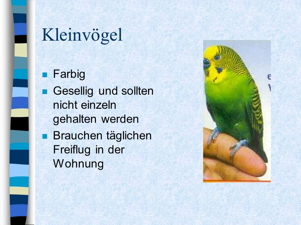 Kleinvögel Farbig Gesellig und sollten nicht einzeln gehalten werden