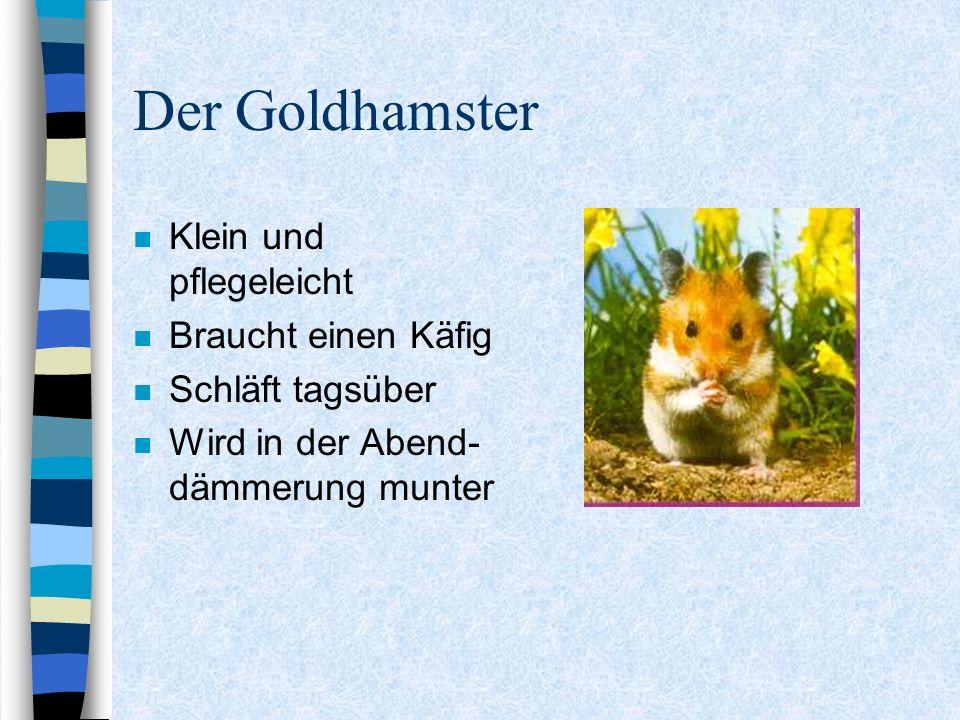 Der Goldhamster Klein und pflegeleicht Braucht einen Käfig