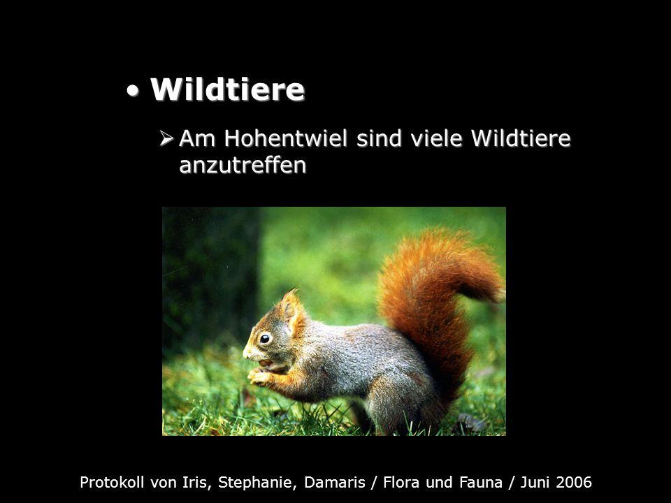 Protokoll von Iris, Stephanie, Damaris / Flora und Fauna / Juni 2006