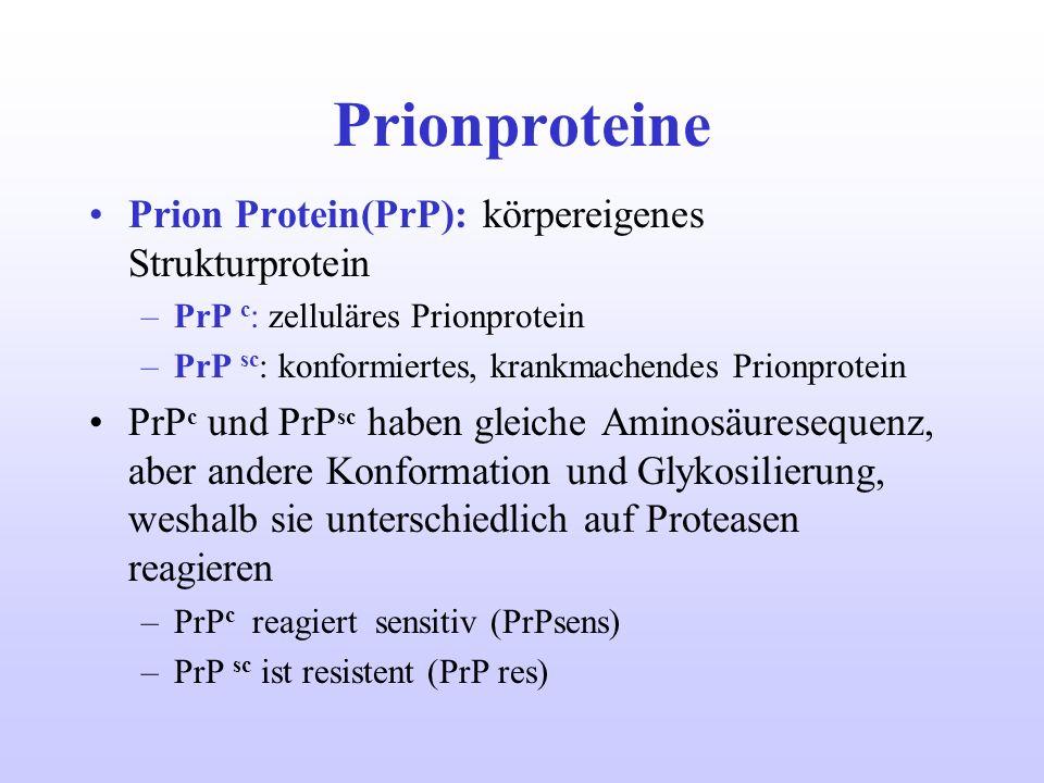 Prionproteine Prion Protein(PrP): körpereigenes Strukturprotein