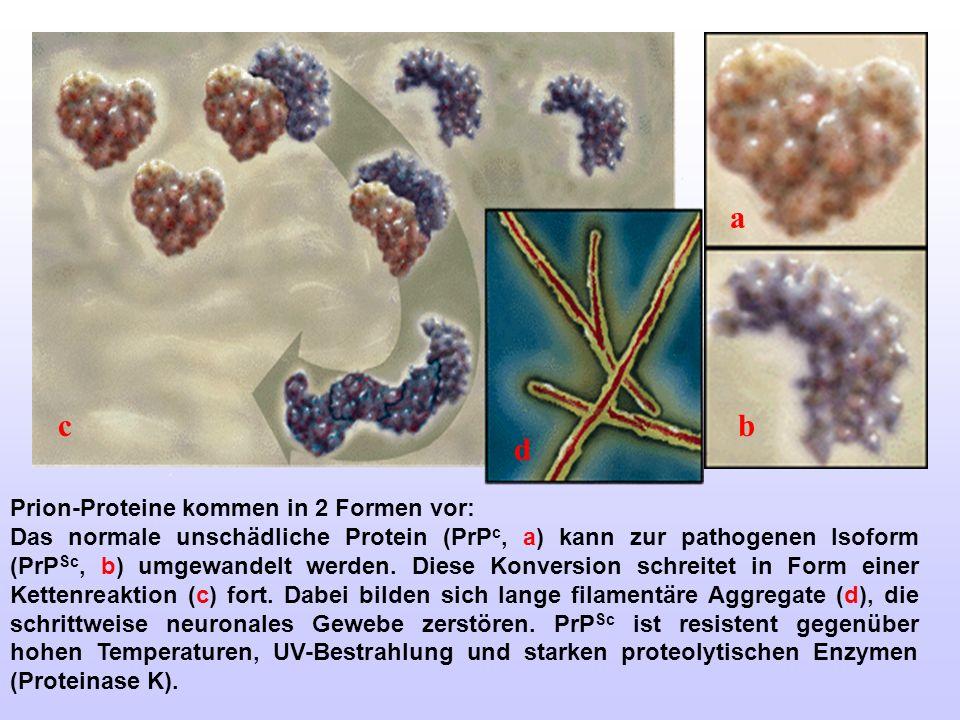a c b d Prion-Proteine kommen in 2 Formen vor: