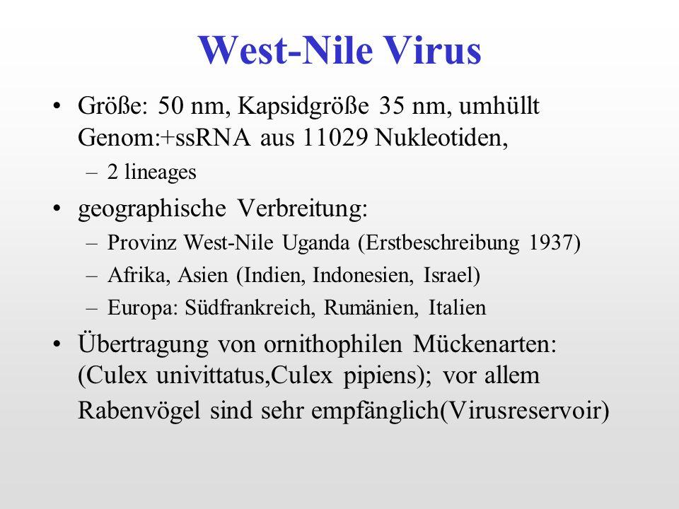 West-Nile Virus Größe: 50 nm, Kapsidgröße 35 nm, umhüllt Genom:+ssRNA aus 11029 Nukleotiden, 2 lineages.