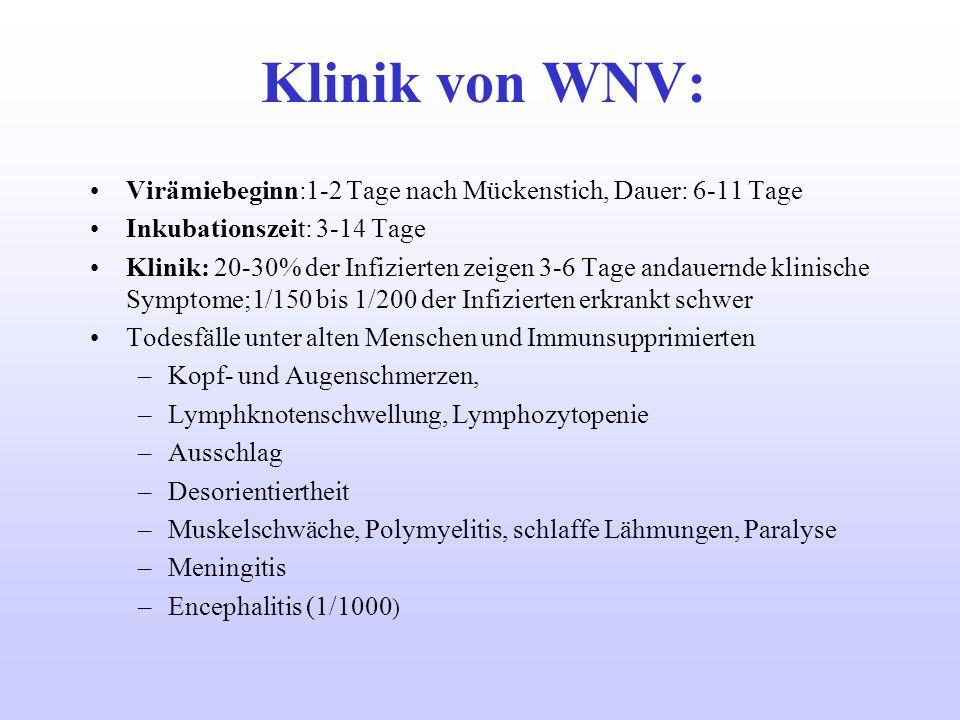 Klinik von WNV: Virämiebeginn:1-2 Tage nach Mückenstich, Dauer: 6-11 Tage. Inkubationszeit: 3-14 Tage.