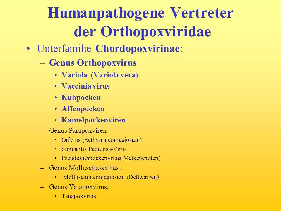 Humanpathogene Vertreter der Orthopoxviridae