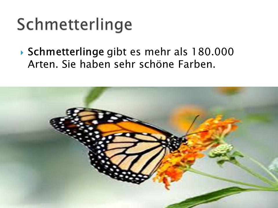 Schmetterlinge Schmetterlinge gibt es mehr als 180.000 Arten. Sie haben sehr schöne Farben.