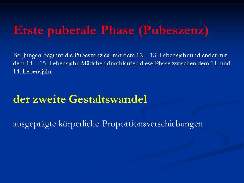 Erste puberale Phase (Pubeszenz)
