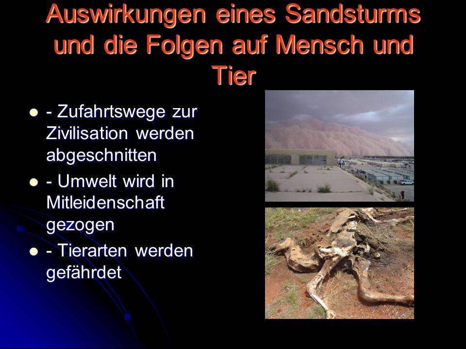 Auswirkungen eines Sandsturms und die Folgen auf Mensch und Tier