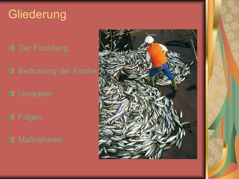 Gliederung Der Fischfang Bedrohung der Fische Ursachen Folgen