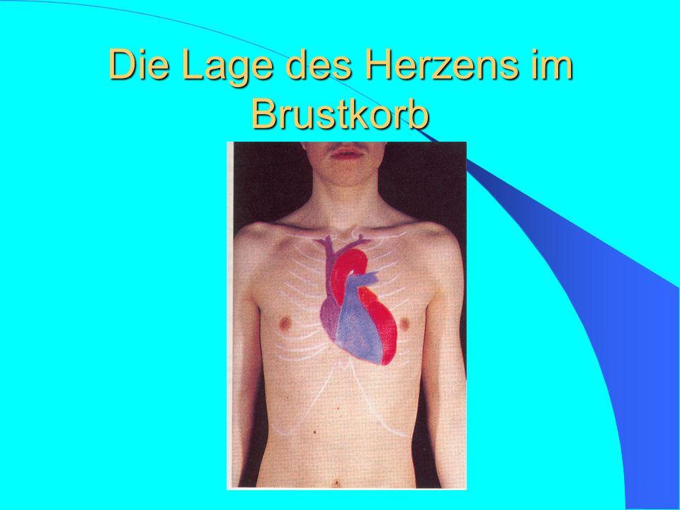 Die Lage des Herzens im Brustkorb