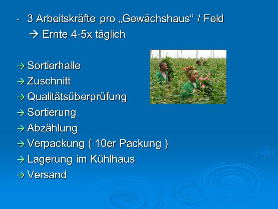 "3 Arbeitskräfte pro ""Gewächshaus / Feld"