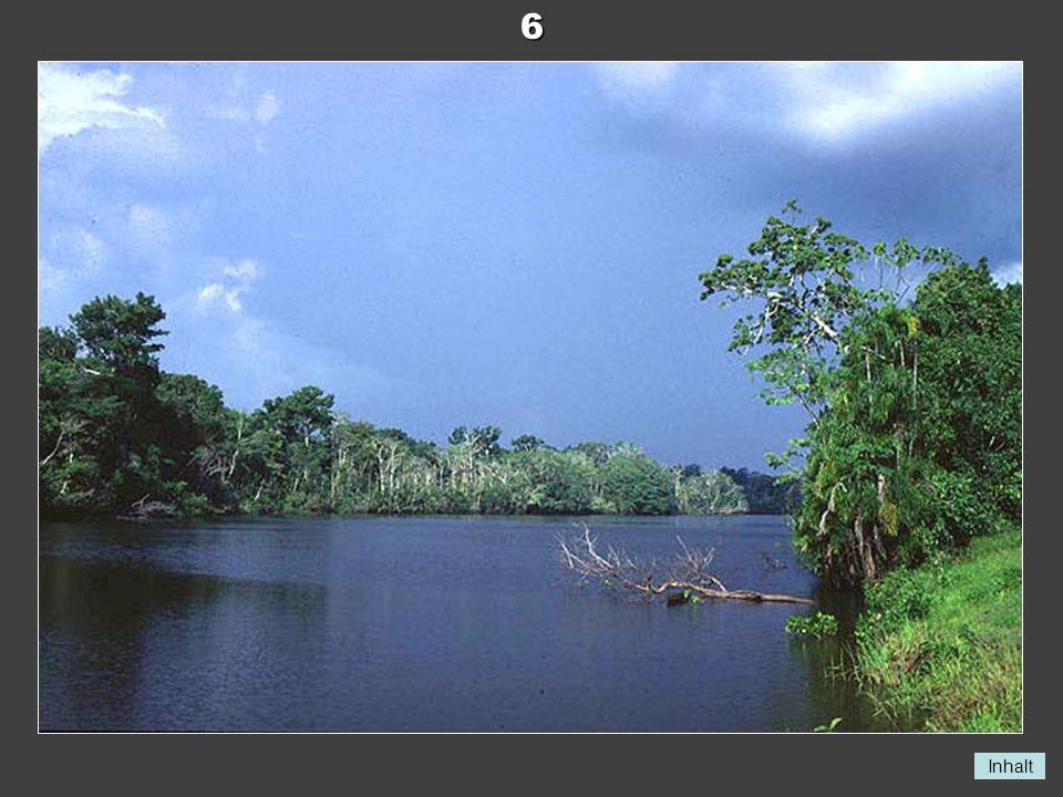 6 Amazonas bei Manaus