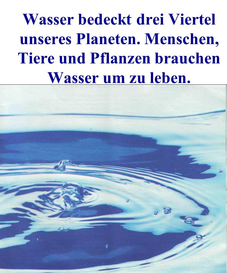 Wasser bedeckt drei Viertel unseres Planeten