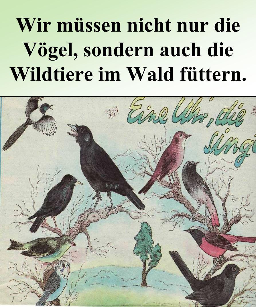 Wir müssen nicht nur die Vögel, sondern auch die Wildtiere im Wald füttern.