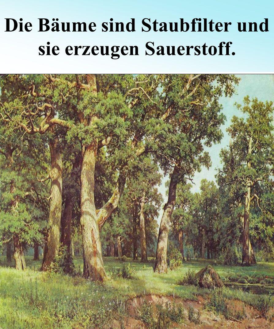 Die Bäume sind Staubfilter und sie erzeugen Sauerstoff.