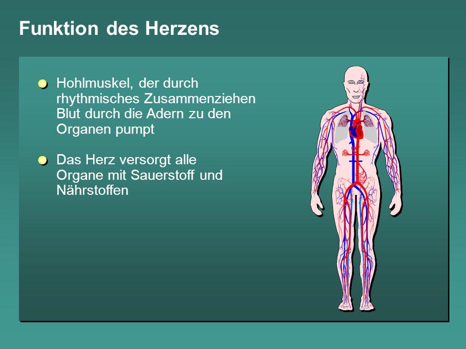 Funktion des Herzens Hohlmuskel, der durch rhythmisches Zusammenziehen Blut durch die Adern zu den Organen pumpt.
