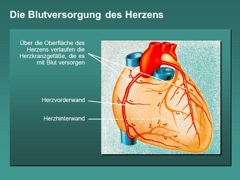 Die Blutversorgung des Herzens