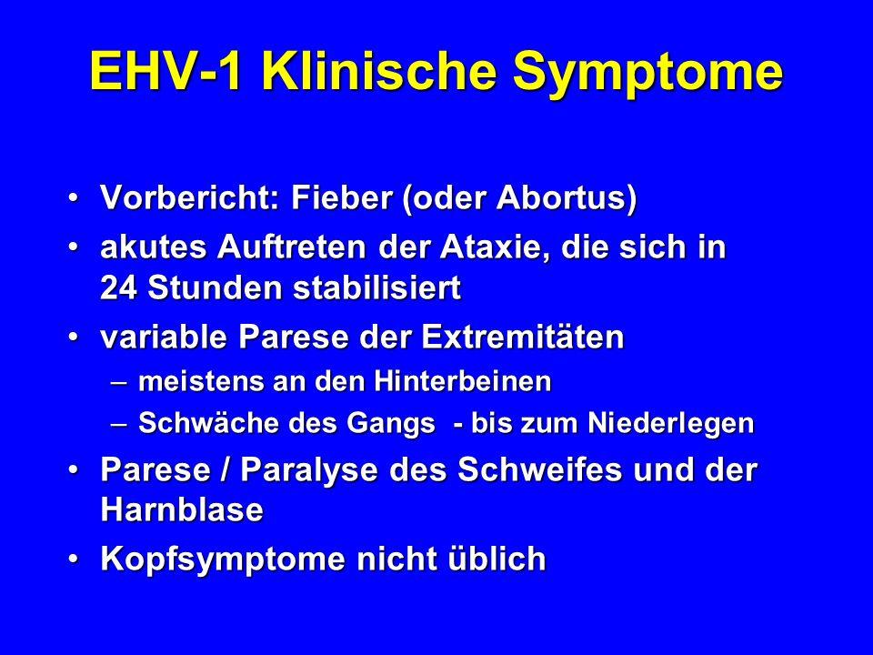 EHV-1 Klinische Symptome