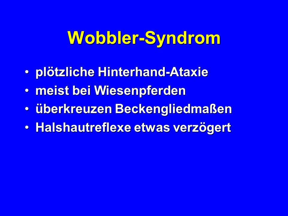 Wobbler-Syndrom plötzliche Hinterhand-Ataxie meist bei Wiesenpferden