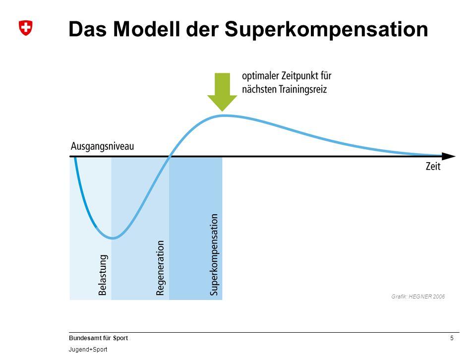 Das Modell der Superkompensation