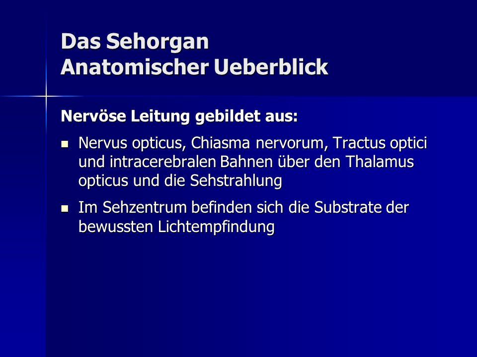 Das Sehorgan Anatomischer Ueberblick