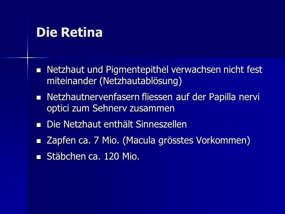Die Retina Netzhaut und Pigmentepithel verwachsen nicht fest miteinander (Netzhautablösung)