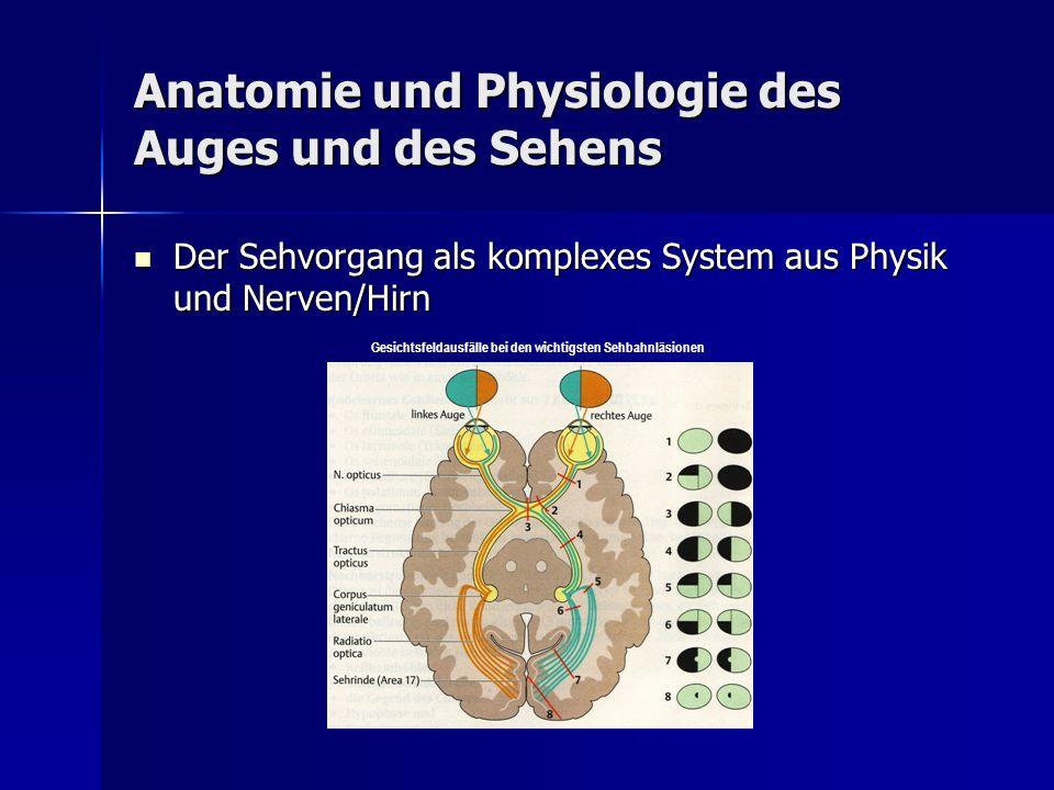 Anatomie und Physiologie des Auges und des Sehens