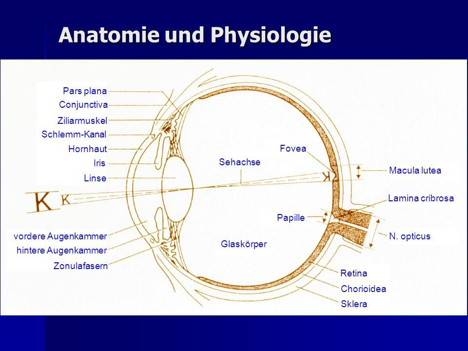 Beste Auge Anatomie Linse Zeitgenössisch - Menschliche Anatomie ...