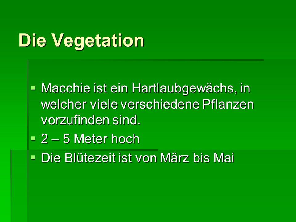 Die Vegetation Macchie ist ein Hartlaubgewächs, in welcher viele verschiedene Pflanzen vorzufinden sind.