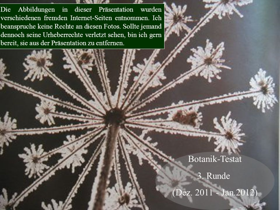 Botanik-Testat 3. Runde (Dez. 2011 - Jan.2012)