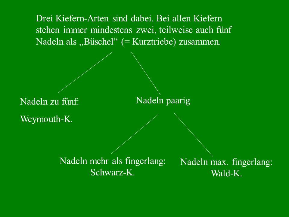 Nadeln mehr als fingerlang: Schwarz-K. Nadeln max. fingerlang: Wald-K.