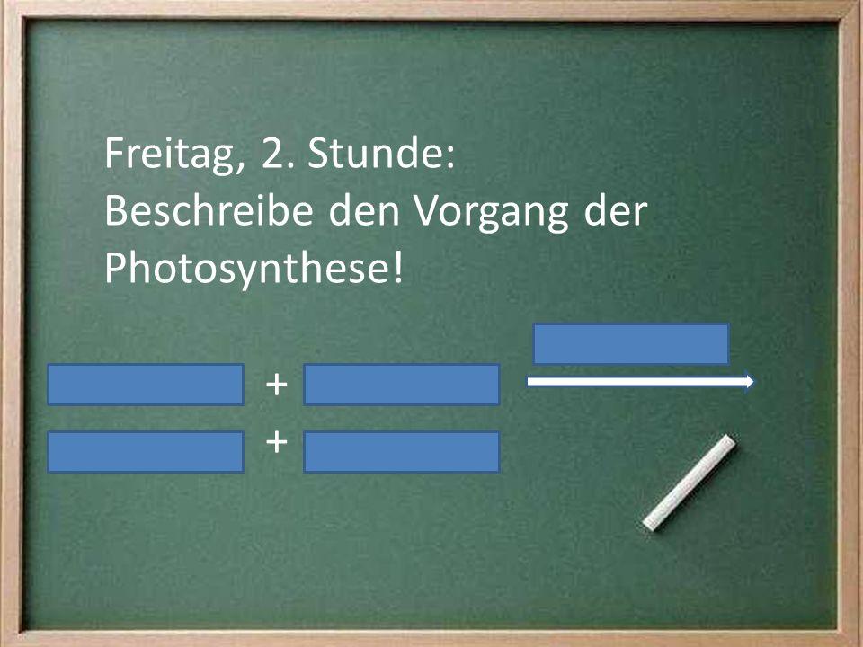 Freitag, 2. Stunde: Beschreibe den Vorgang der Photosynthese! +