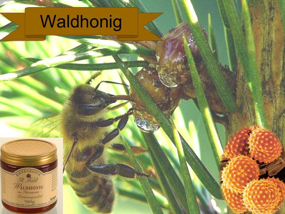 Waldhonig Waldhonig