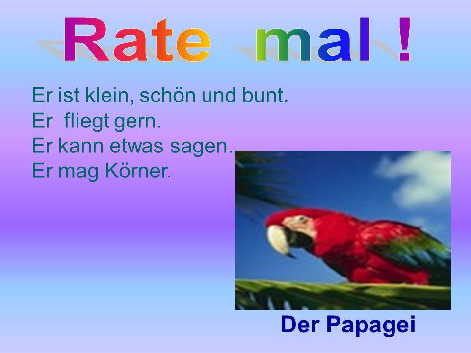 Rate mal ! Der Papagei Er ist klein, schön und bunt. Er fliegt gern.