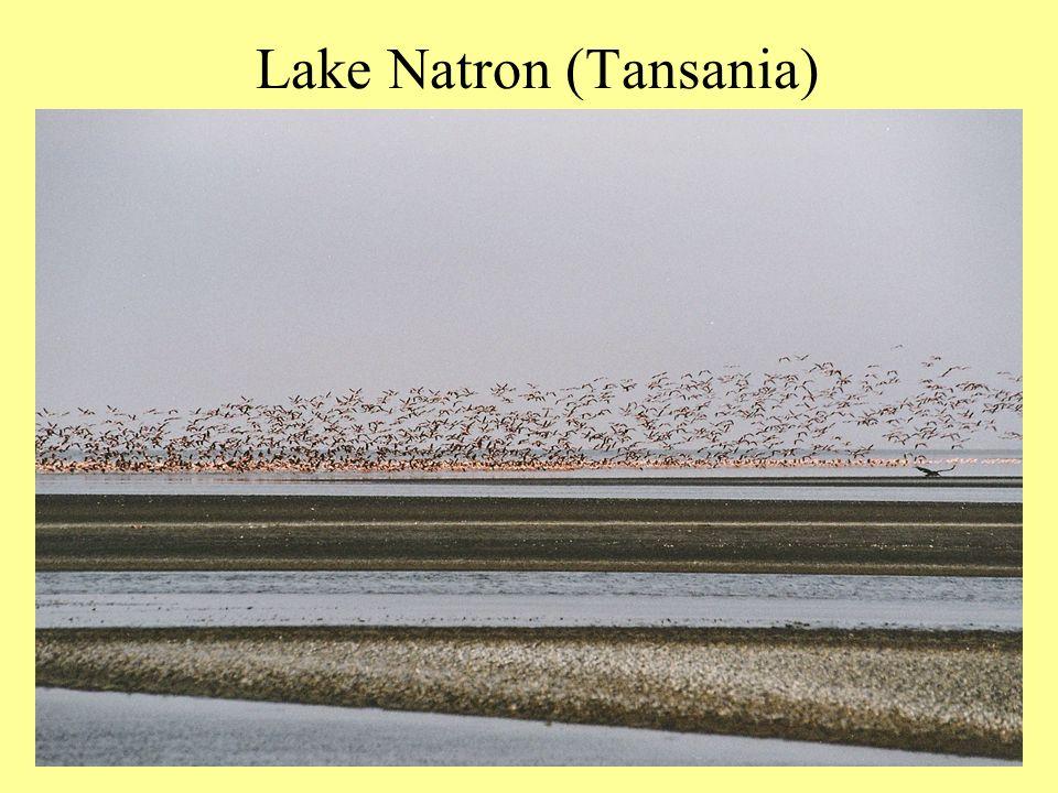 Lake Natron (Tansania)