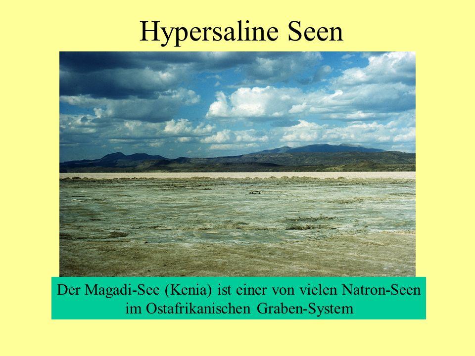 Hypersaline Seen Der Magadi-See (Kenia) ist einer von vielen Natron-Seen.