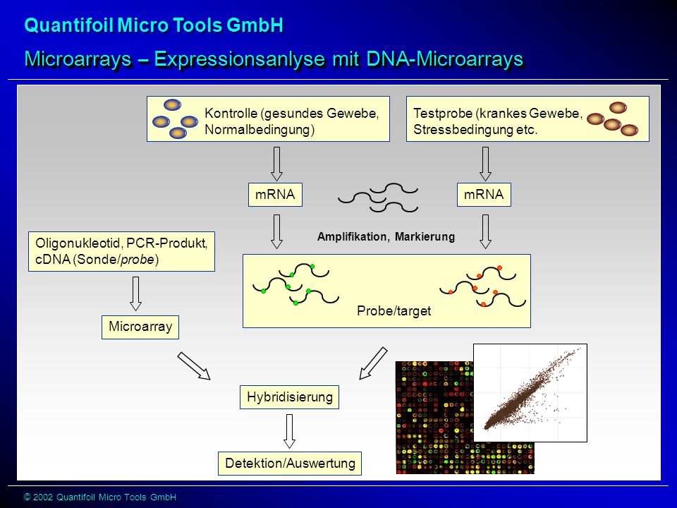 Microarrays – Expressionsanlyse mit DNA-Microarrays