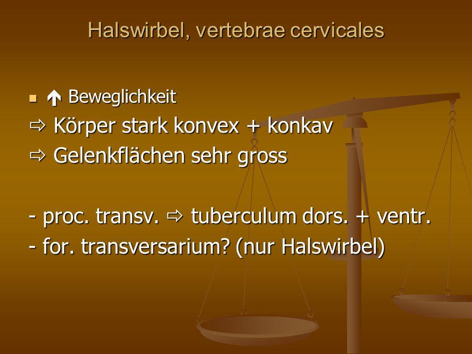 Halswirbel, vertebrae cervicales